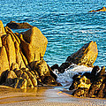 Beach Rocks by Shane Bechler