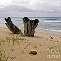 Beach Scenery by Sophie Vigneault