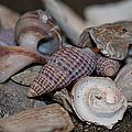 Beach Shells 3 by WB Johnston