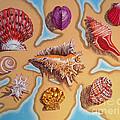 Beach Shells by Annette Jimerson