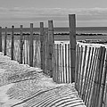 Beach Snow  by Catherine Reusch Daley