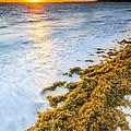 Beach Sunrise by Sebastian Musial