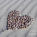 Beach Treasure by Jola Martysz