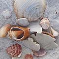 Beach Treasures 2 by Megan Cohen