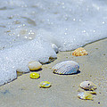 Beach Treasures by Bill Cannon