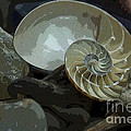 Beach Treasures by Jeanette French