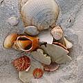 Beach Treasures by Megan Cohen