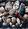 Beach Treasures by Virginia Folkman