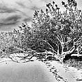Beach Tree by Lori-Anne Fay