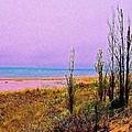 Beach Trees by Daniel Thompson