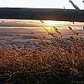 Beach Under Fence by Safe Haven Photography Northwest