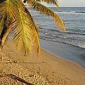 Beach Under Golden Palm by Anita Burgermeister