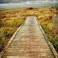 Beach Walkway by Debra Fedchin