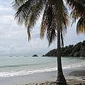 Beach With Palm Tree by Anita Burgermeister