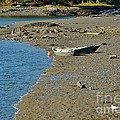 Beached Dinghy by Anne Clark