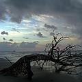 Beached Tree by Douglas Stucky