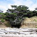 Beachtree by Kimberly Maxwell Grantier