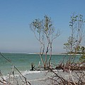 Fort De Soto Beachview by Christiane Schulze Art And Photography