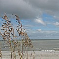 Beachview With Seaoat  by Christiane Schulze Art And Photography