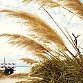 Beachy by Ashley Hall