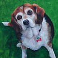 Beagle by Pet Whimsy  Portraits