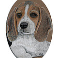 Beagle by Ron Bird