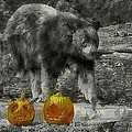 Bear And Pumpkins by Alice Gipson