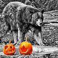 Bear And Pumpkins Too by Alice Gipson