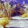 Bear Creek Trail II by Dominic Piperata