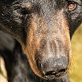 Bear by Doug McPherson