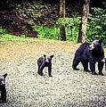 Bear Family Affair by Jan Dappen