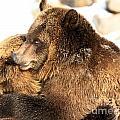 Bear Hug by Adam Jewell