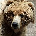 Bear In Pallete Knfe Filter by Eric Curtin