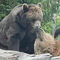 Bear Kisses by Laura Elder