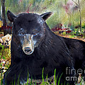 Bear Painting - Blackberry Patch - Wildlife by Jan Dappen