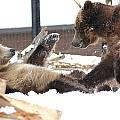 Bear Play by Brenda Boyer