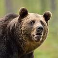 Bear Portrait by Erik Mandre