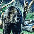 Bear by Rich Priest