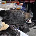 Bear Skins For Sale by YJ Kostal