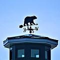 Bear Weathervane by Tara Potts