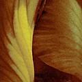 Bearded Iris by Angela Stanton