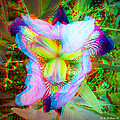 Bearded Iris Cultivar - Use Red-cyan 3d Glasses by Brian Wallace