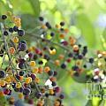 Bearing Good Fruit by Sean Rathbun