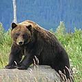 Bearly Posing by Lew Davis
