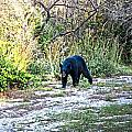 Bearly Stroll by Judy Hall-Folde