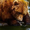 Bearly Wet by Steve Wilkes