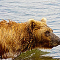 Bear's Eye View Of Swimming Grizzly In Moraine River In Katmai by Ruth Hager