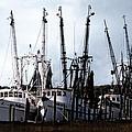 Beaufort Fleet by John  Nickerson