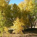 Beautiful Autumn by Isabella McClellan