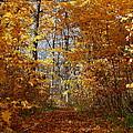 Beautiful Autumn Sanctuary by Kay Novy